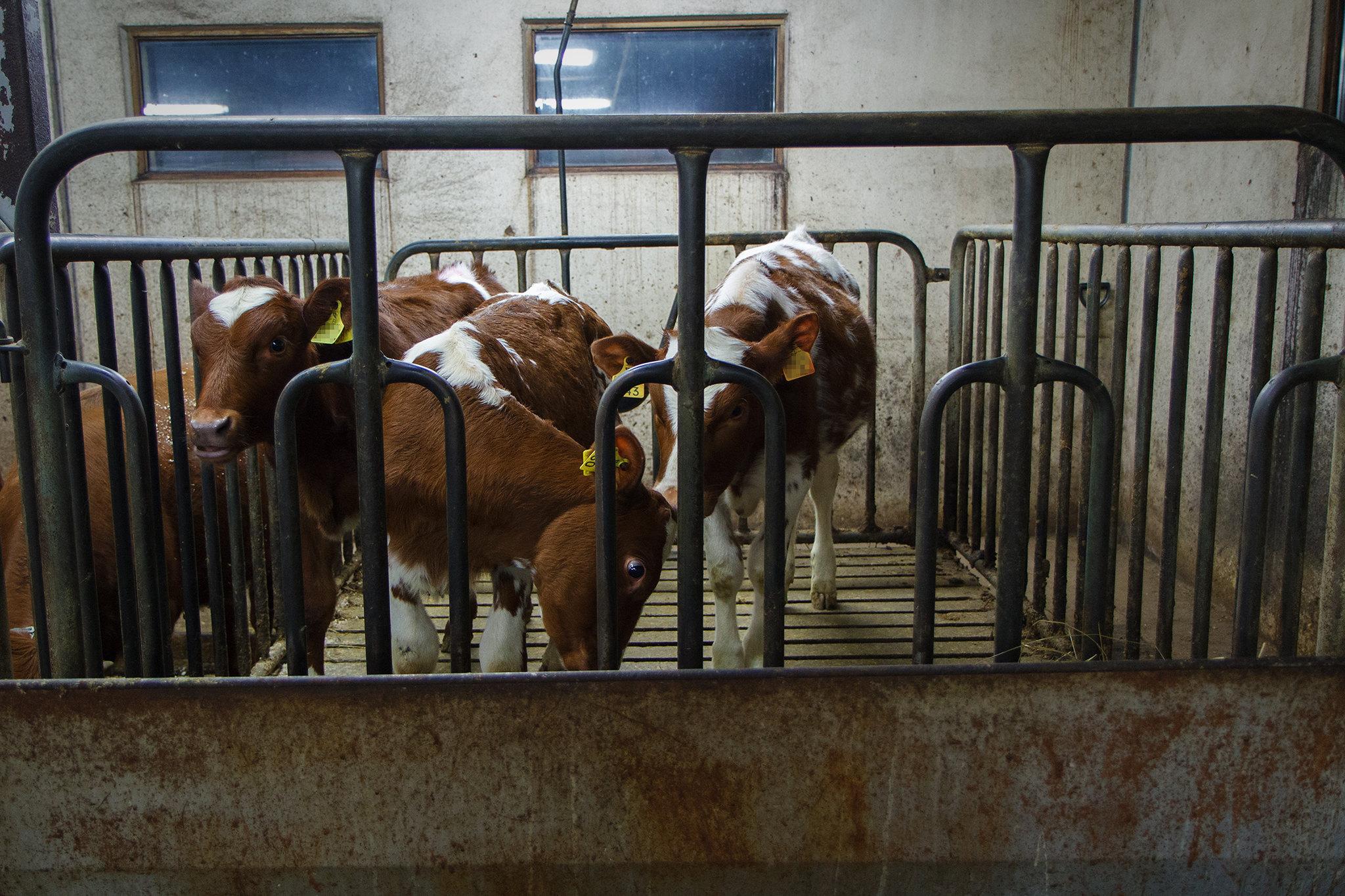Pour des assiettes sans souffrance animale